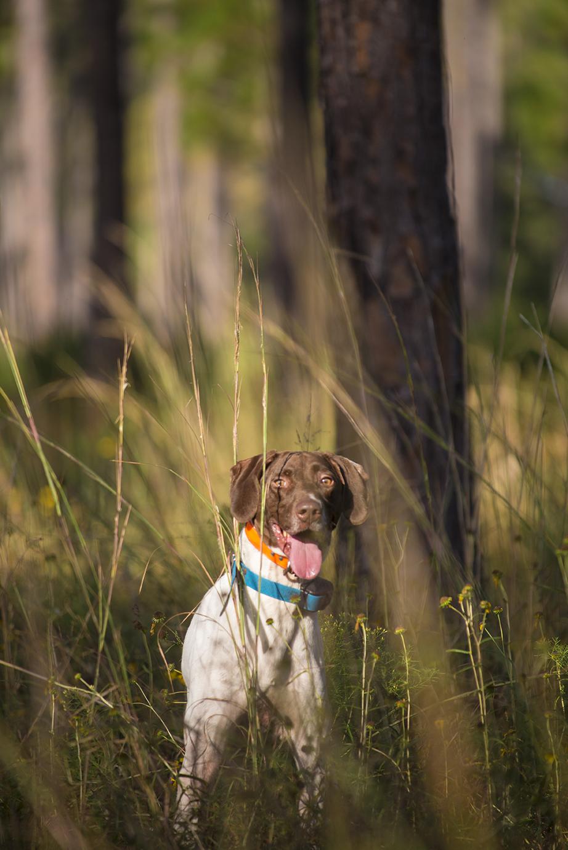 quail_dog.jpg