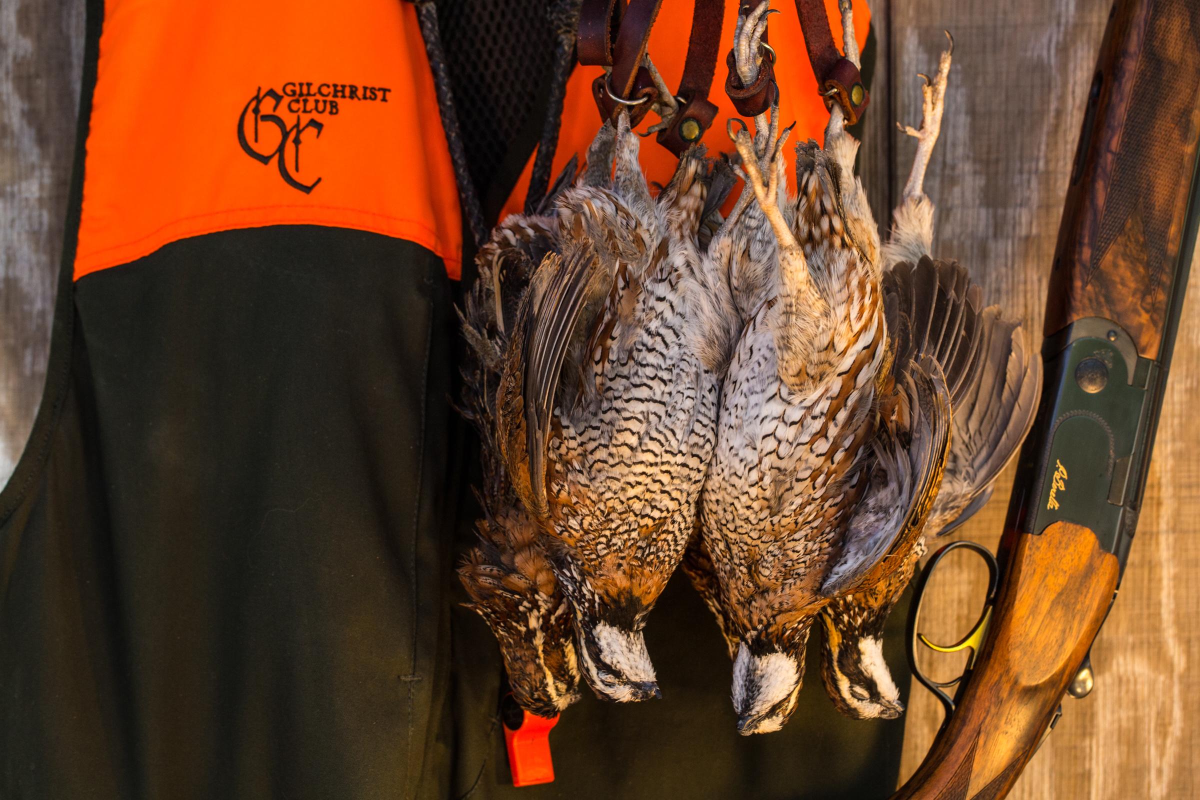 quail_hang.jpg