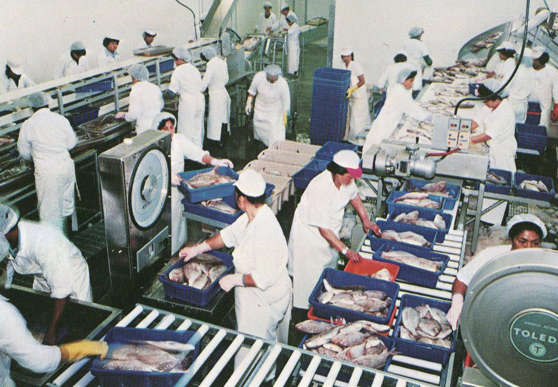 """Workers packing fish for the Chinese market in 1970. From """"The Story of Sandford LTD. by Paul Titchener"""" 1981."""