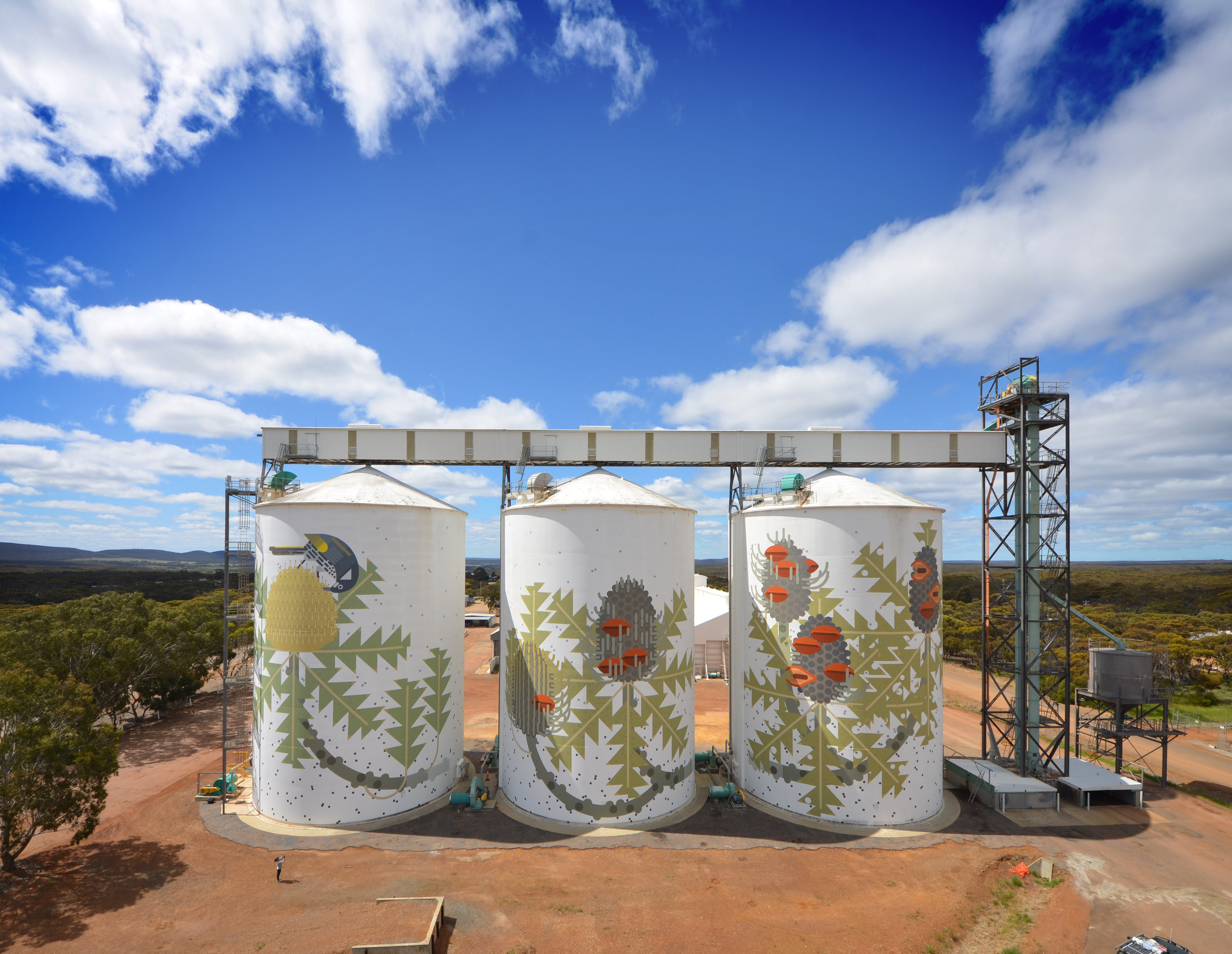 Ravensthorpe, WA Australia 2016. 'Six Stages of Banksia Baxteri' (side 2) Commissioned by FORM WA and CBH -  click for more about this project
