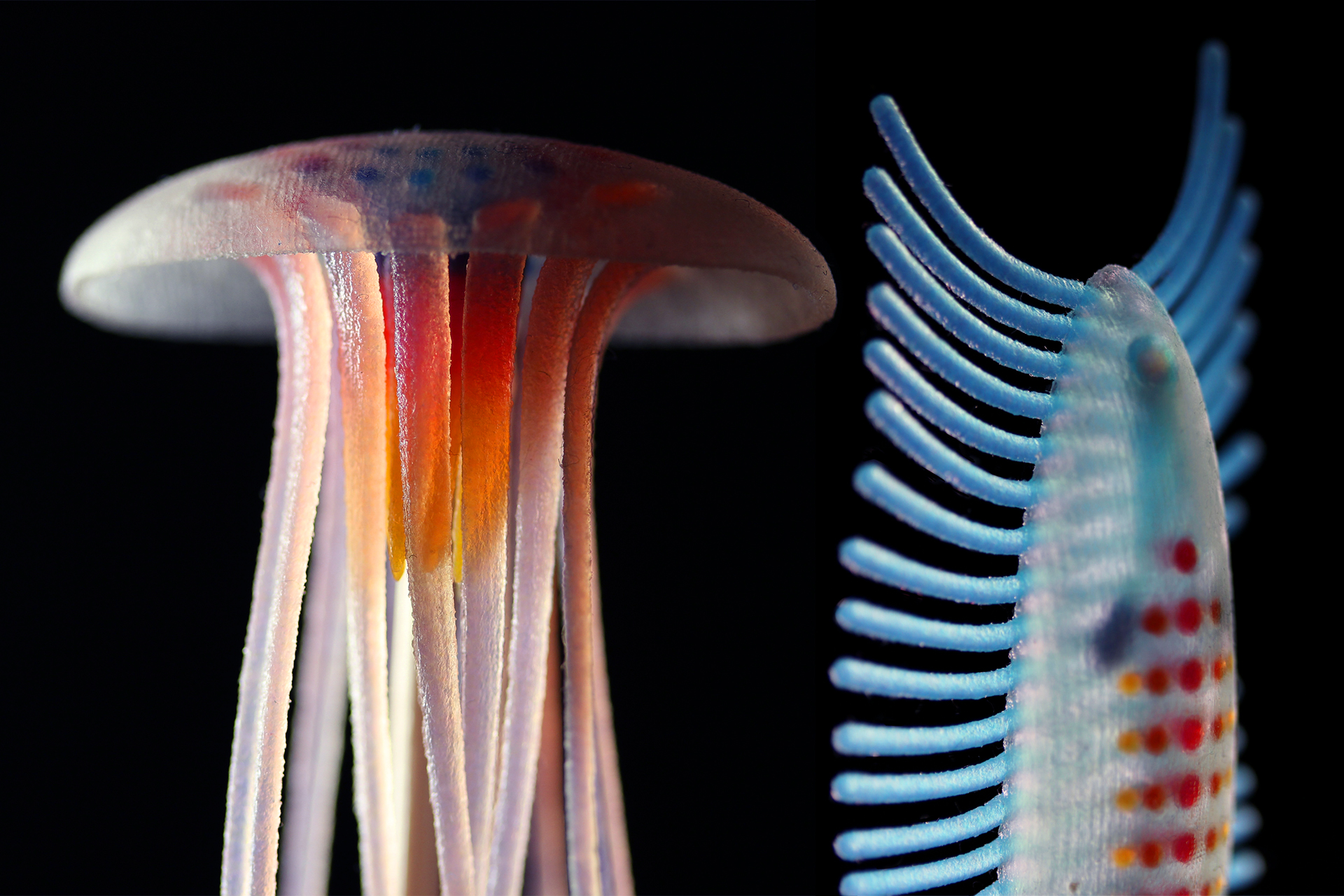 synthetic-jellies.jpg