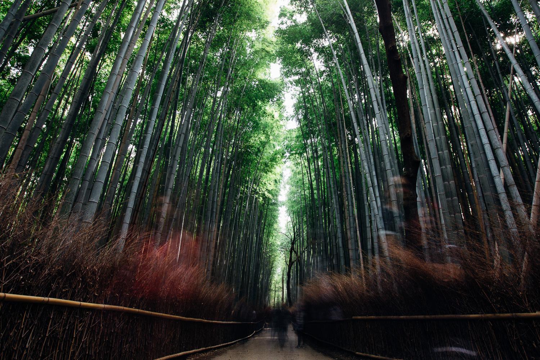 Japan-3255.jpg