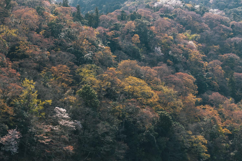 Japan-3966.jpg