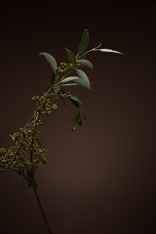 Botanicals Day-2-200375-Edit.jpg