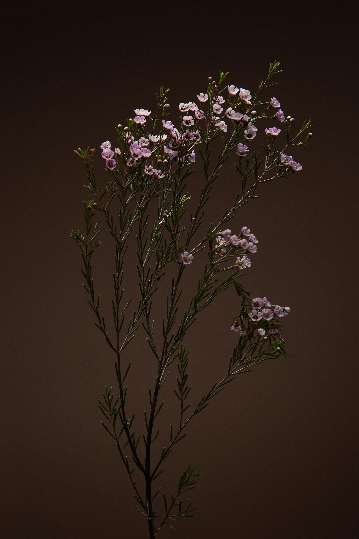 Botanicals Day-2-200480-Edit.jpg