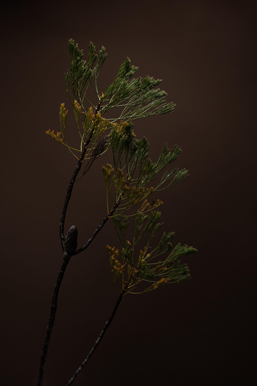 Botanicals-0086-Edit.jpg