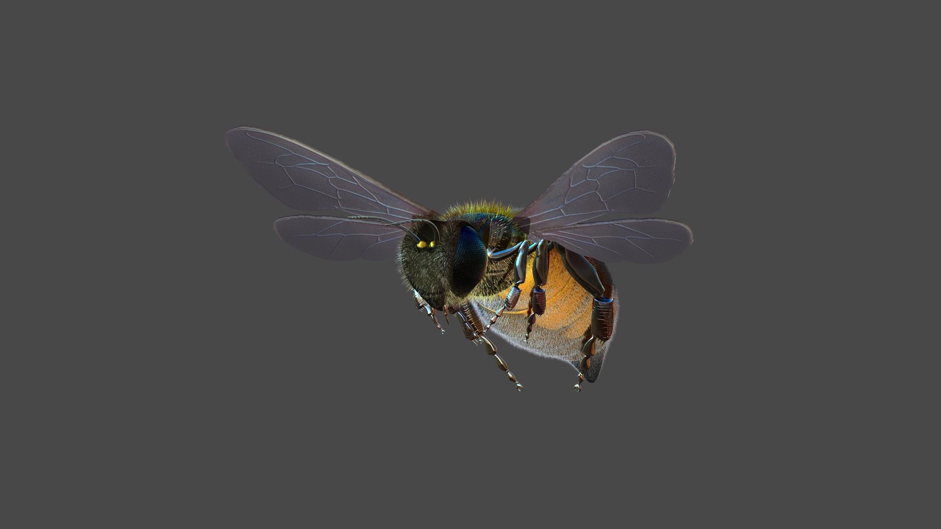 Honeybee1.jpg
