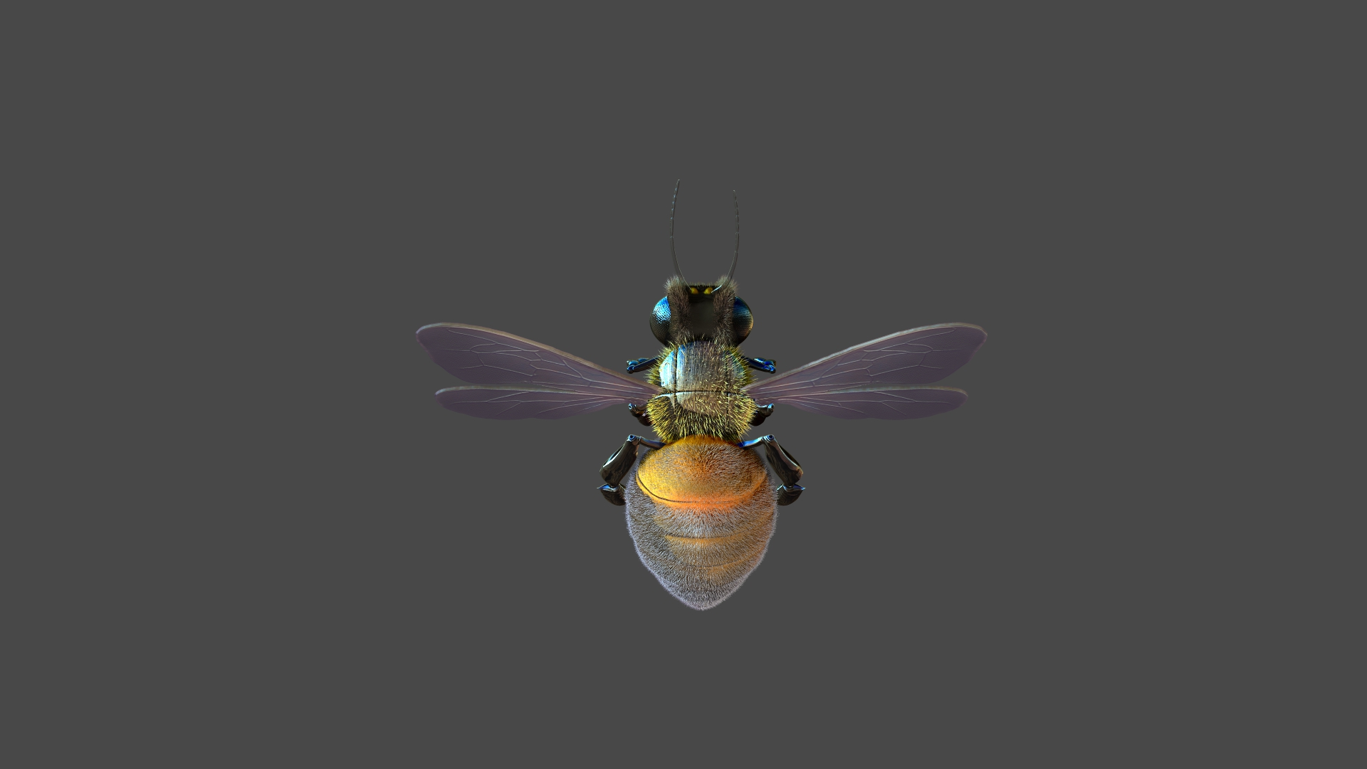 Honeybee4.jpg