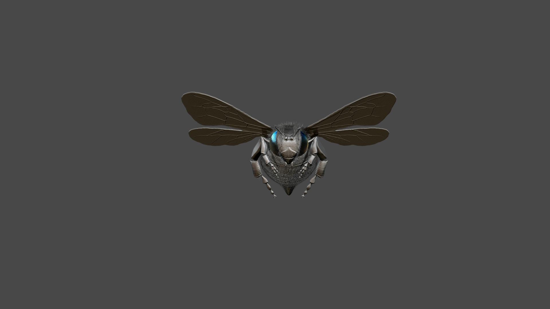 Honeybee5.jpg