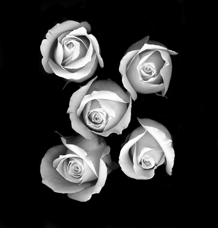 Roses #1, 2005