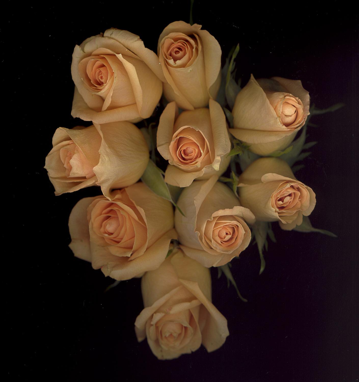 Roses #2, 2005