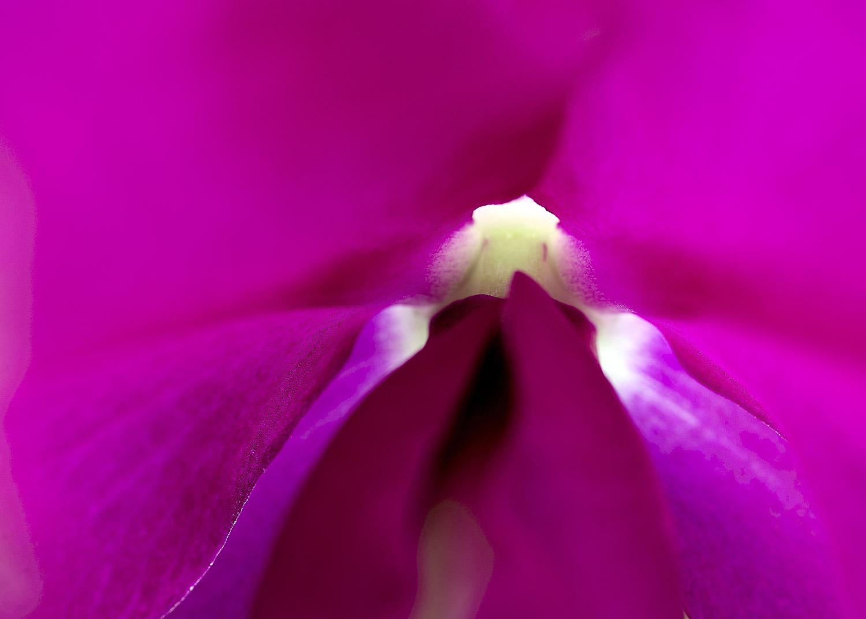 Sensual Botanica #14, 2006