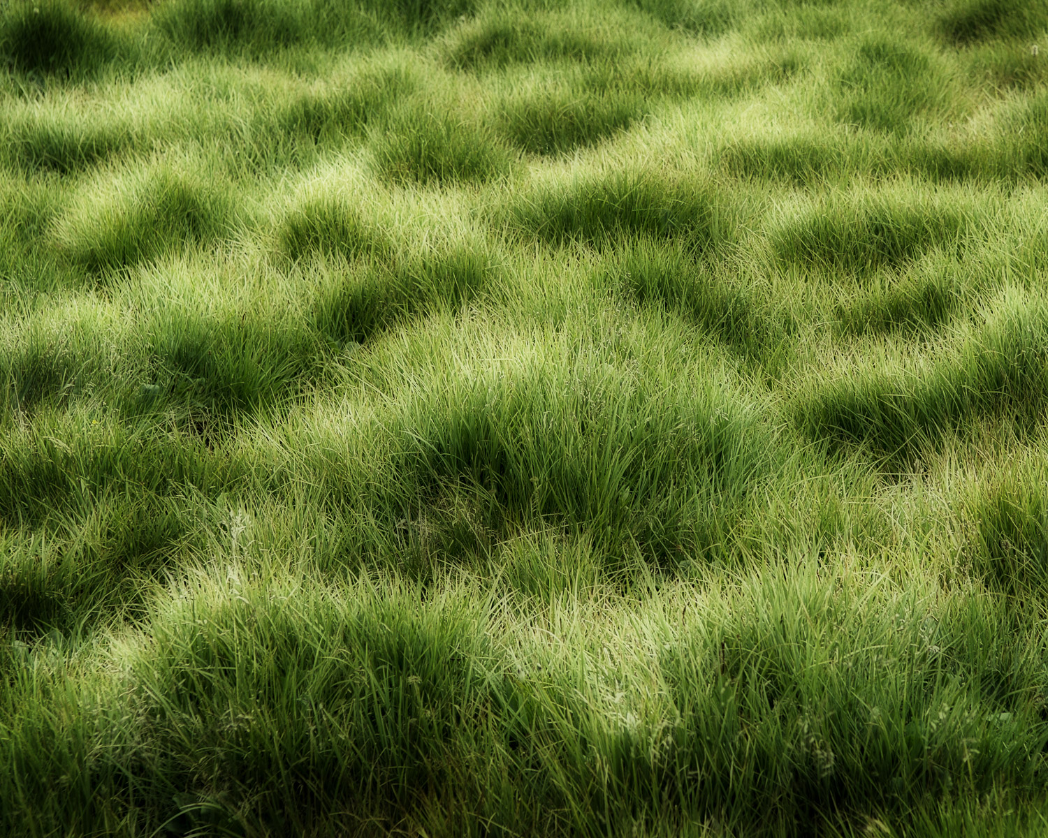 Grass Waves, Guanella Pass, CO, 2006