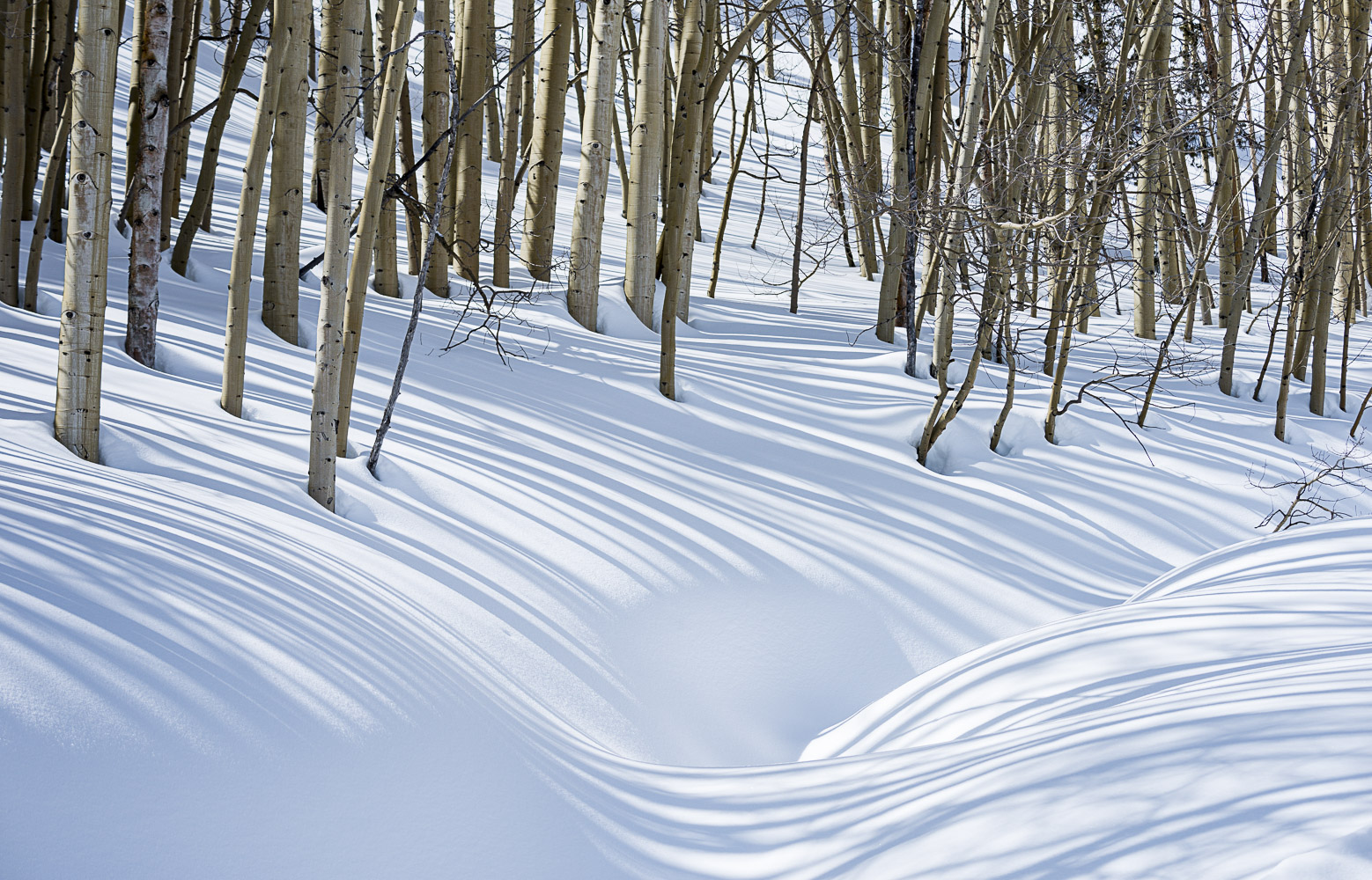 Wavy Shadows, Crested Butte, CO, 2014
