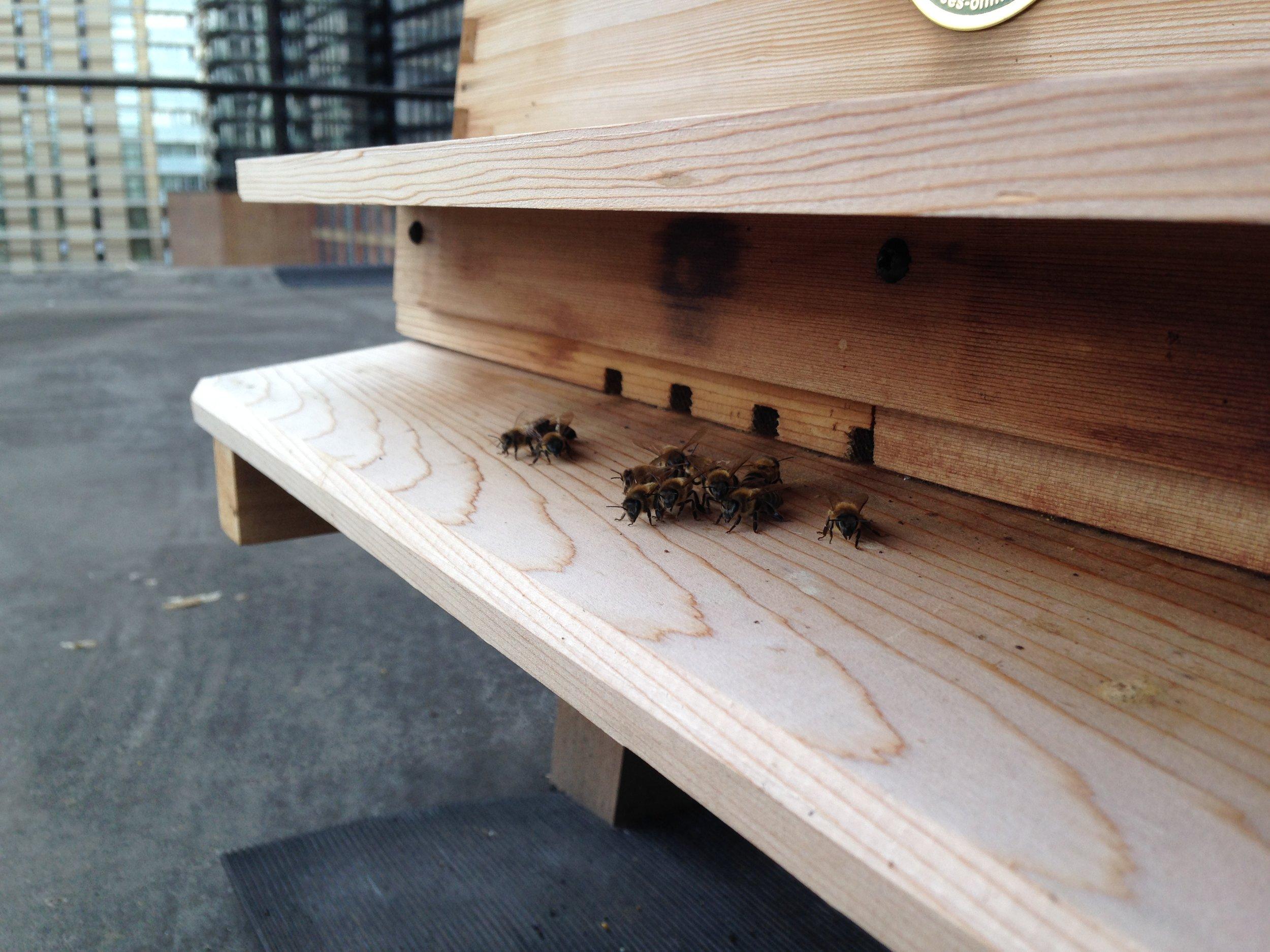 Bee Pic 7.JPG