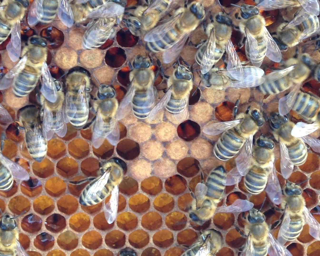Bee Pic 8.JPG
