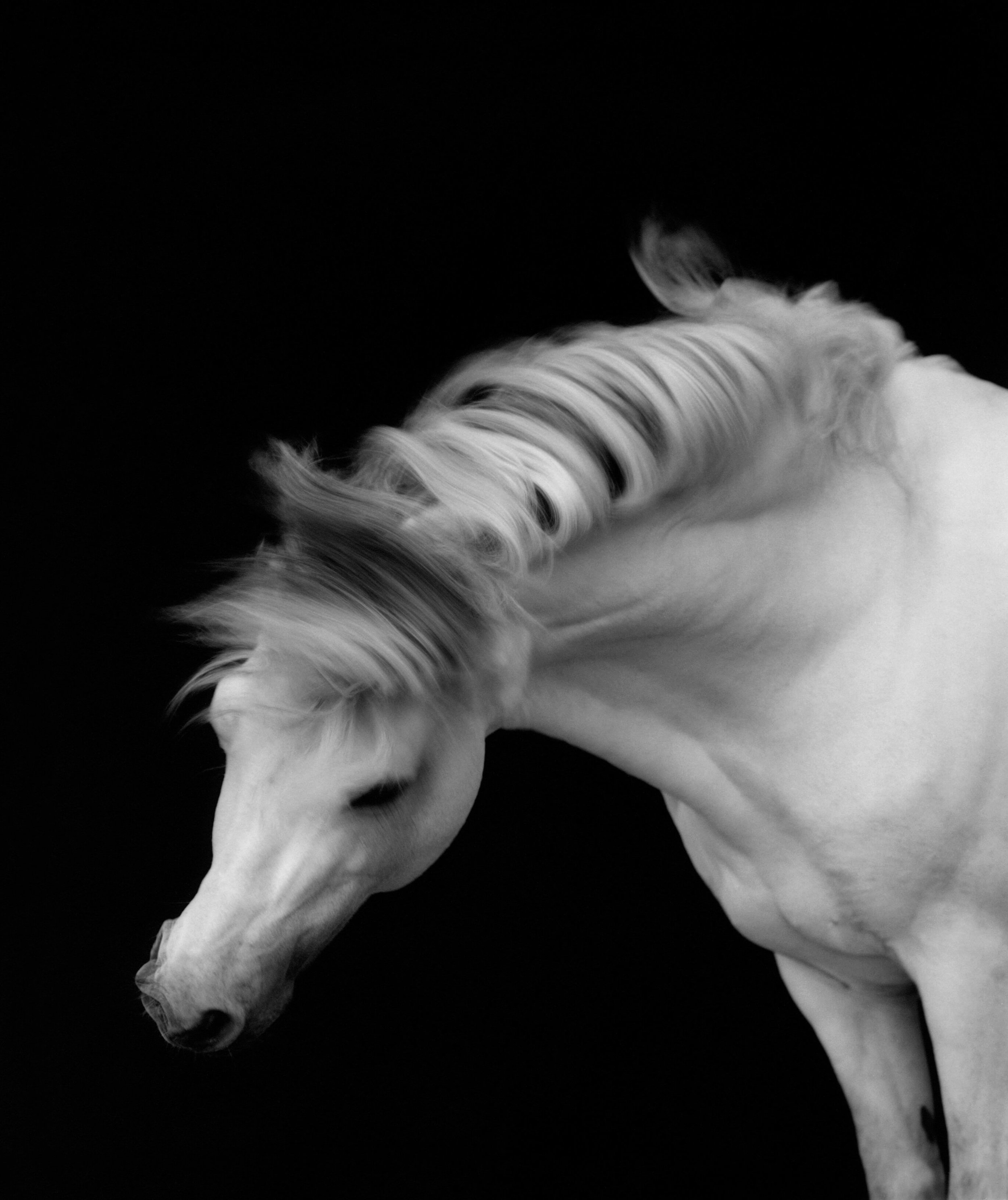 'Horse #1' by Sheila Rock