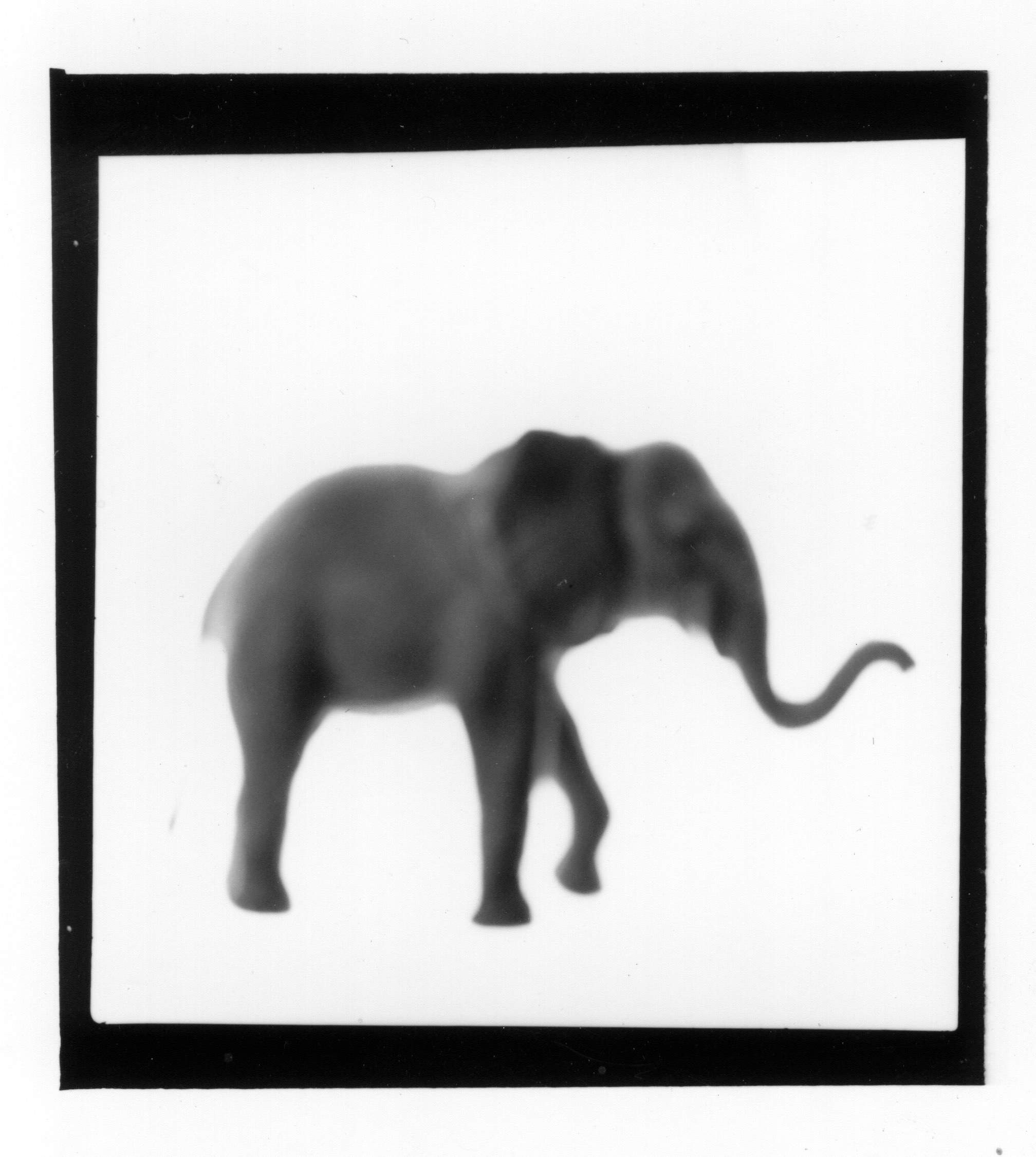 Elephant from The Animals Series, 2000