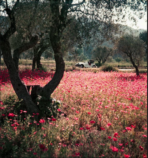 Florette in the Morgan, Provence, May 1954
