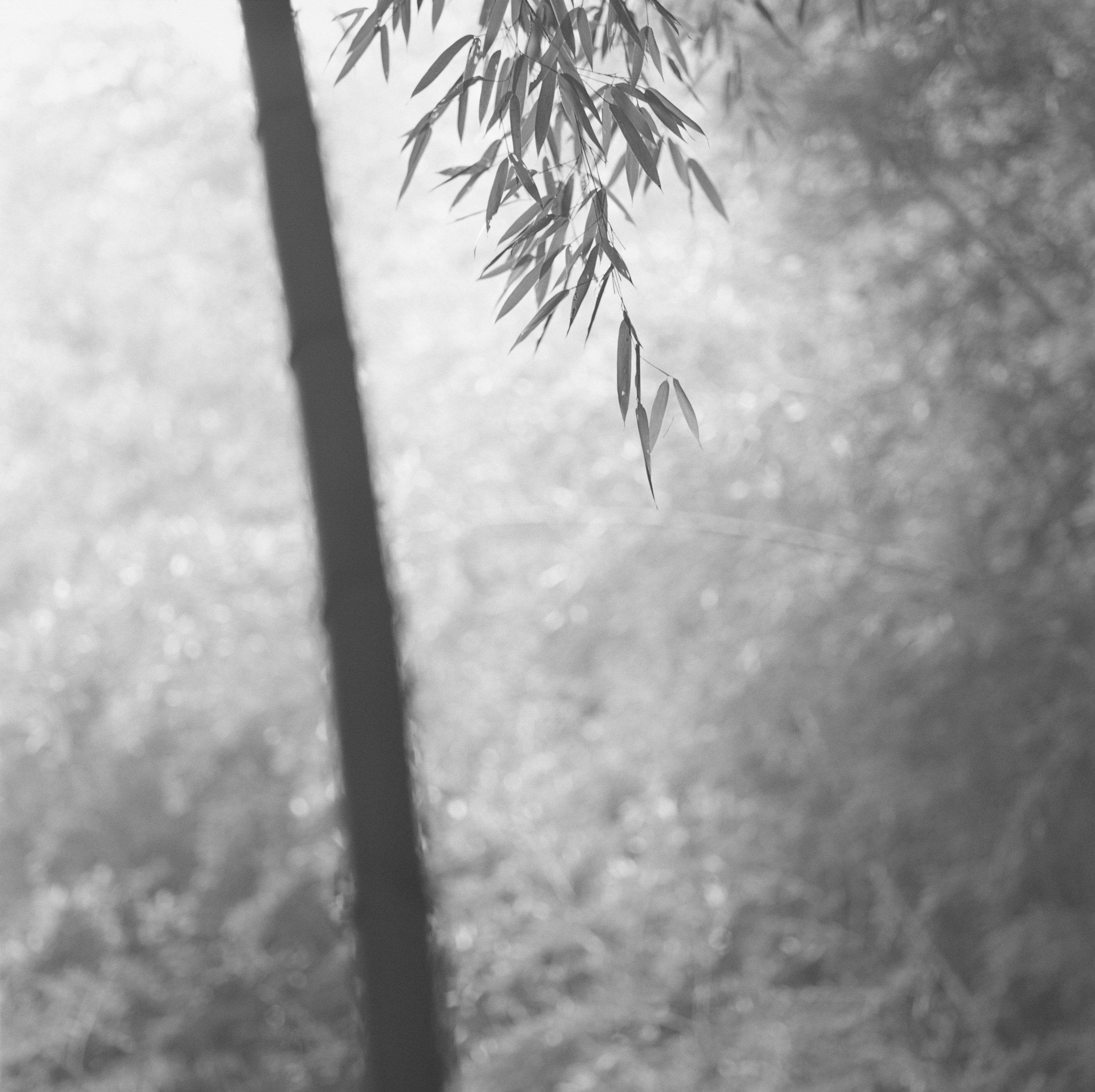 Bamboo Grey 08