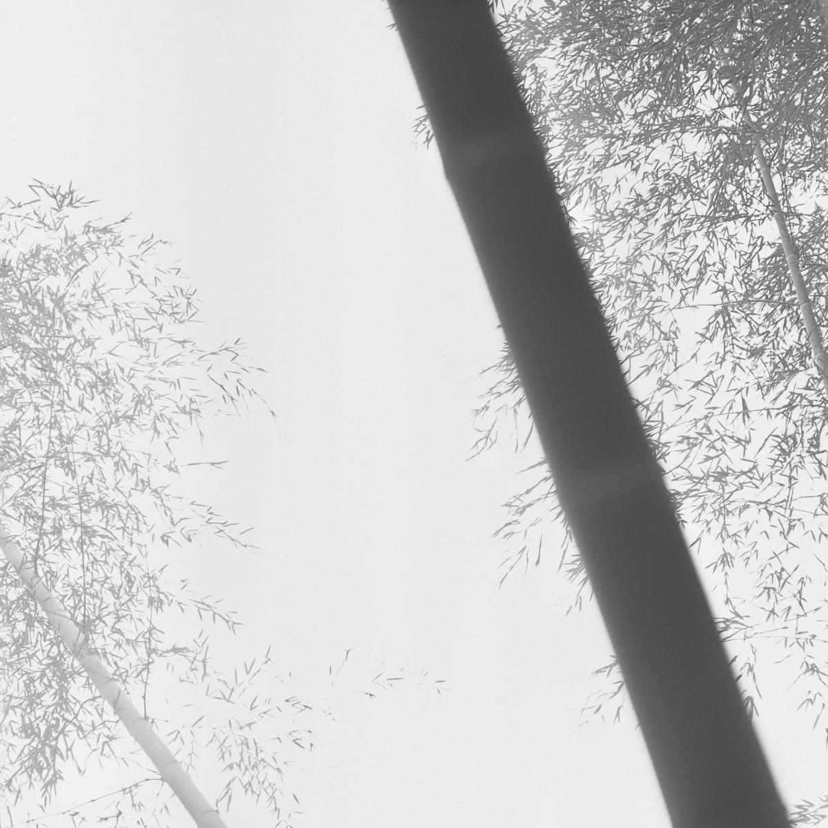 Bamboo Grey 01