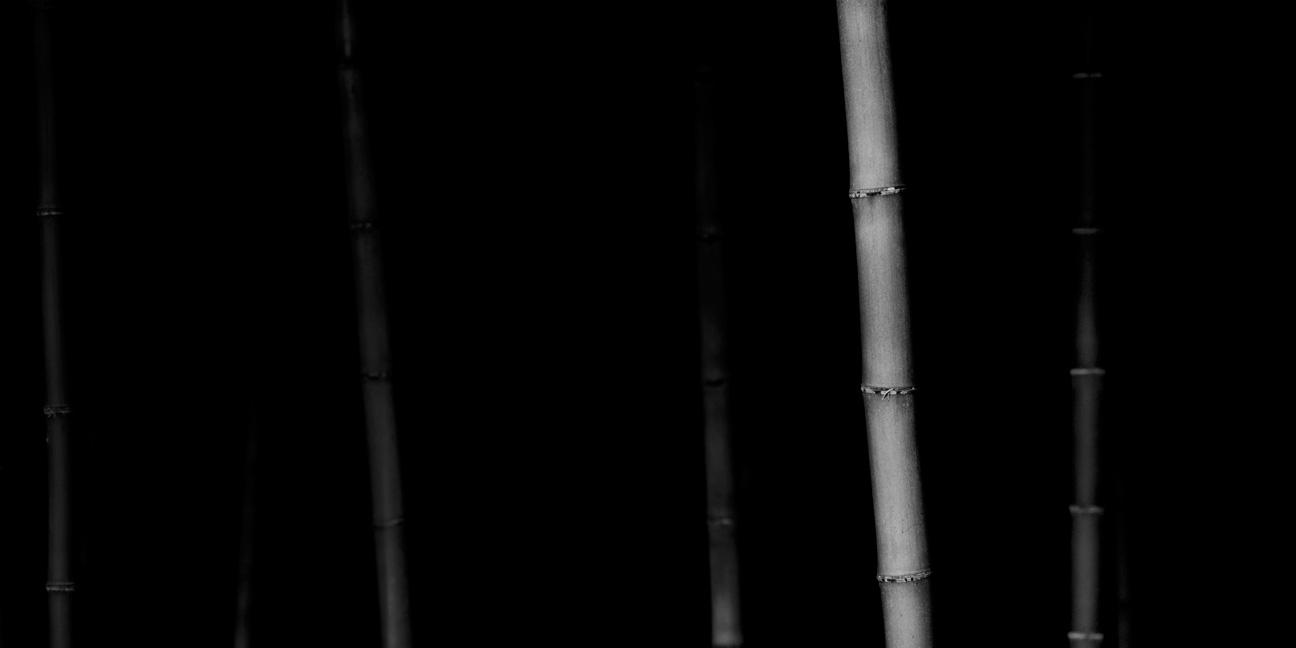 Bamboo Panorama 05