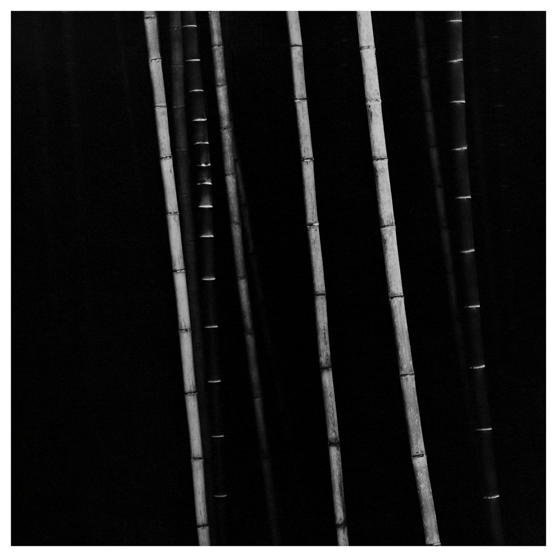Bamboo Square 05