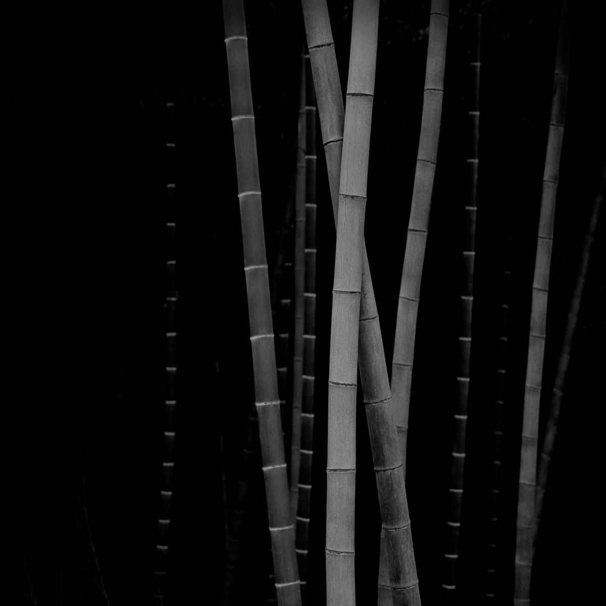 Bamboo Square 07