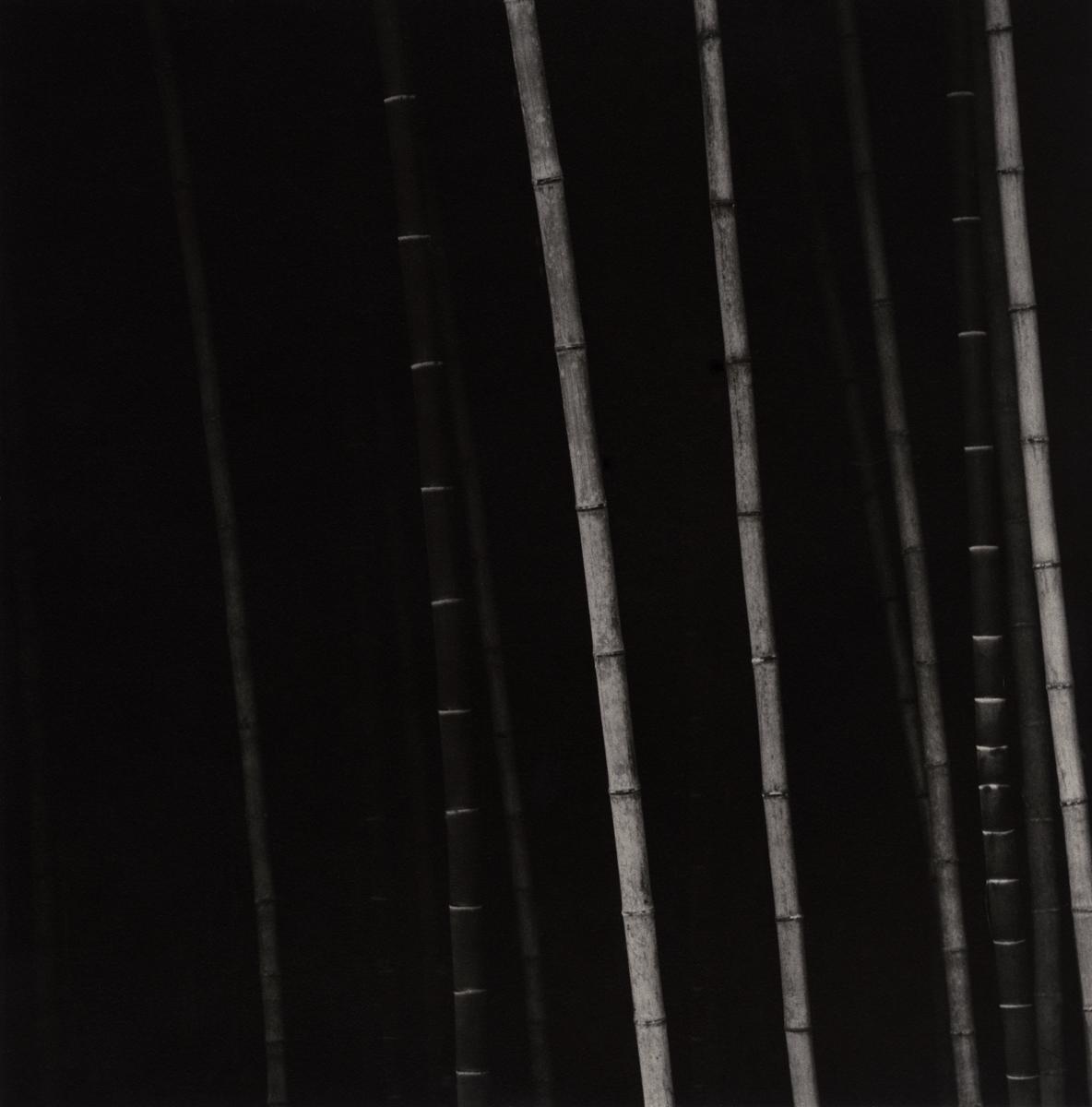 Bamboo Square 05