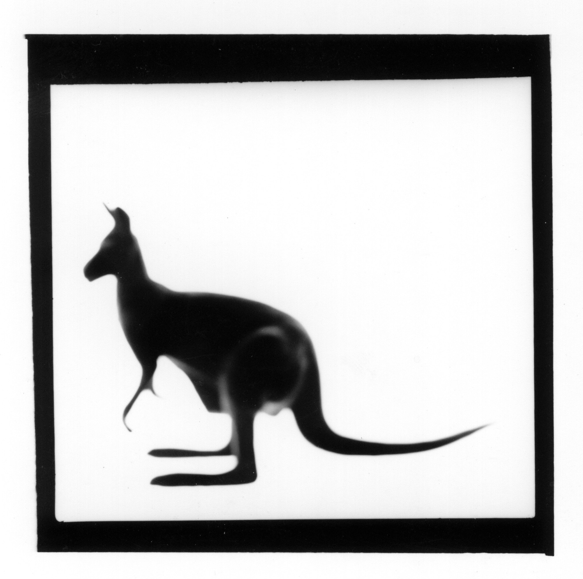 Kangaroo from The Animal Series, 2000