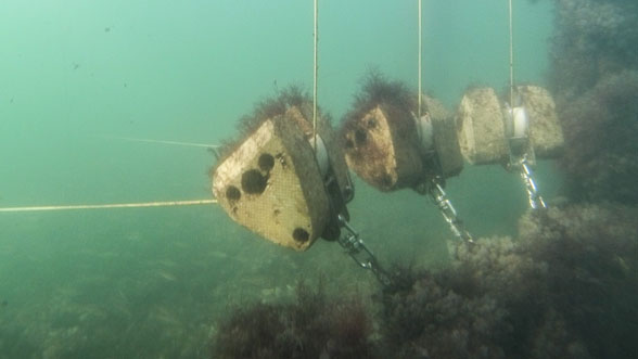 - With rising temperatures during the summer, the natural growth of underwater flora around the 1:10-test system, increased enormously. Thereby, the applied protective mechanisms have proved themselves, so that the functionality of the components persisted as expected without any restrictions. In addition, material samples exposed near the wave energy converter five months ago are now providing first findings regarding their chemical resistance.
