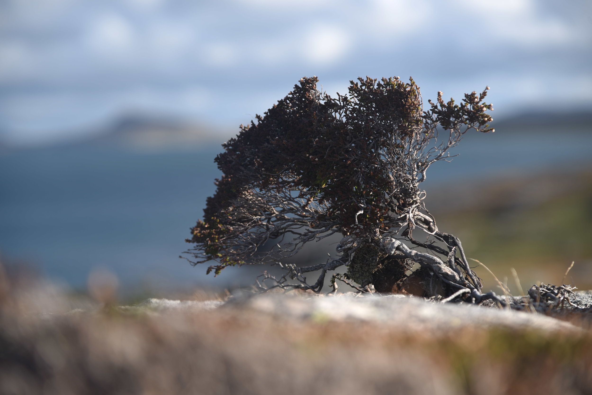This one was taken, lying down across the rock but it works…….heather impersonating a tree!