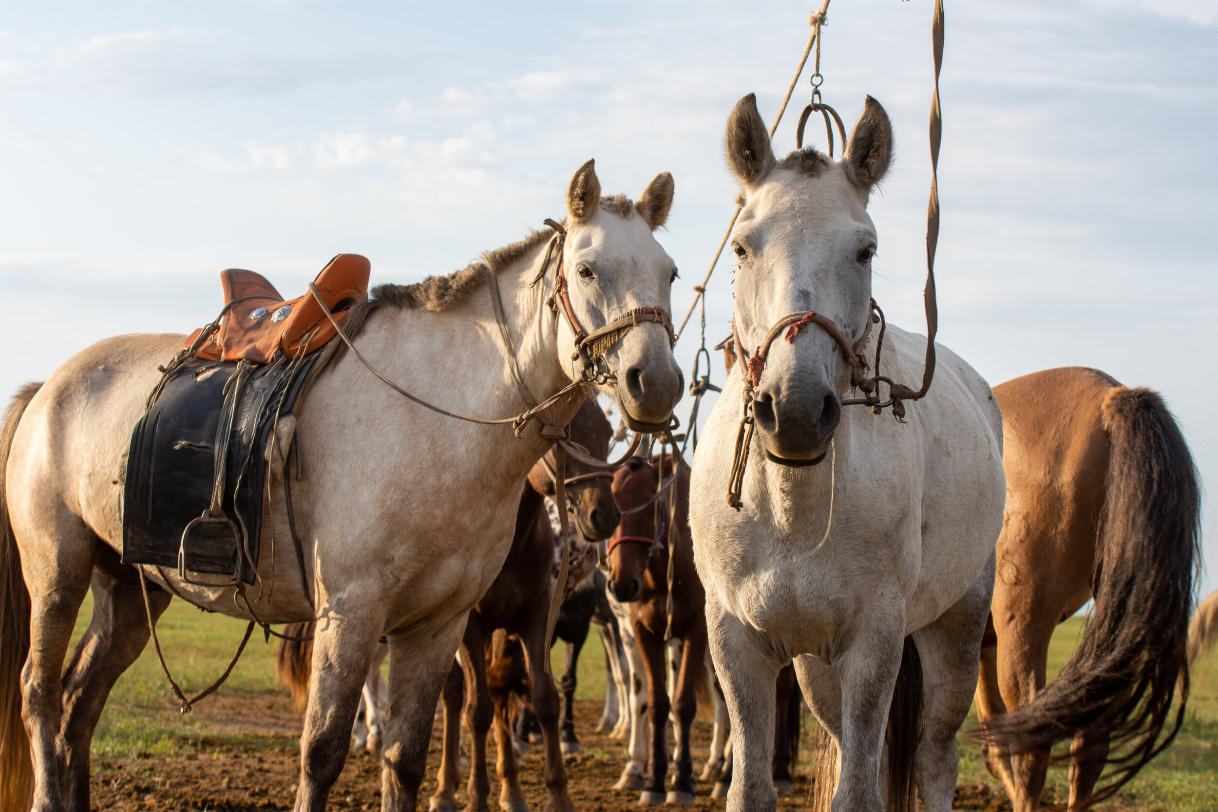 Have you got the HORSEMANSHIP it takes? -