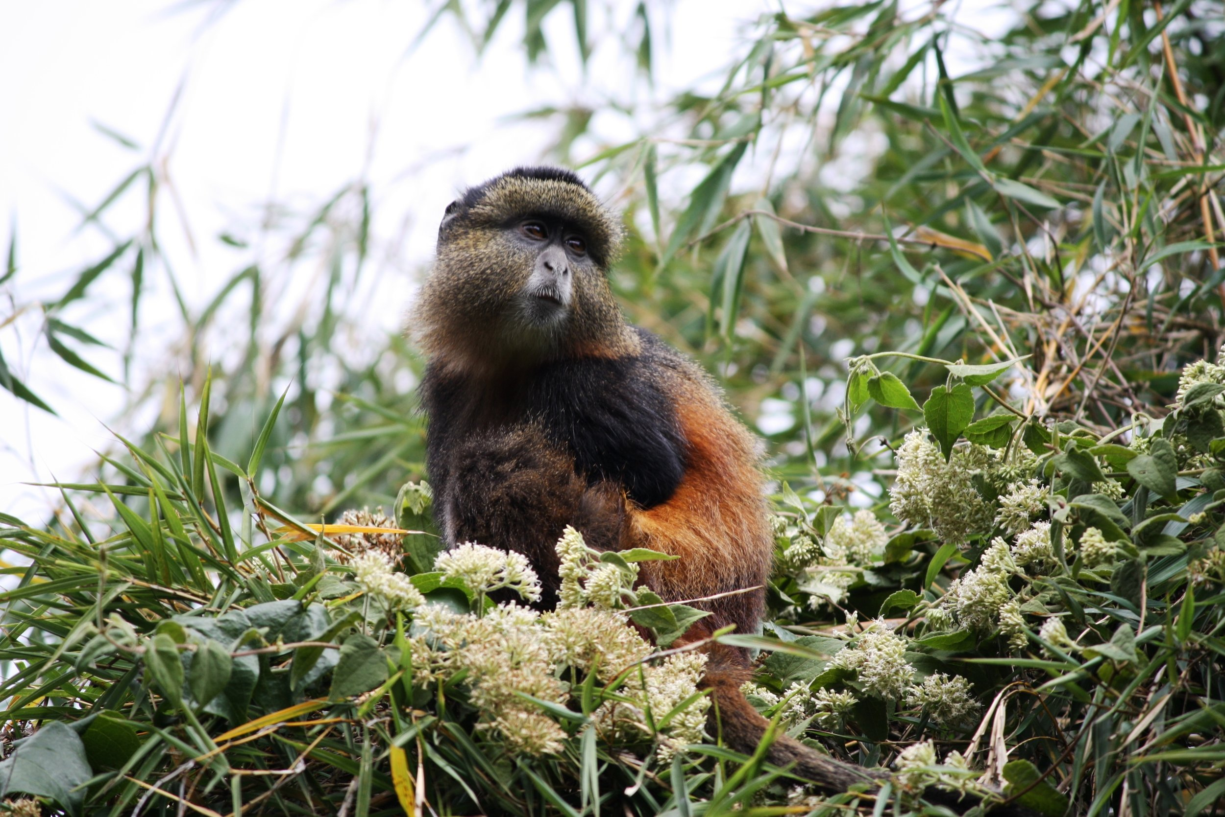 Encounter wild golden monkeys in their natural environment. -