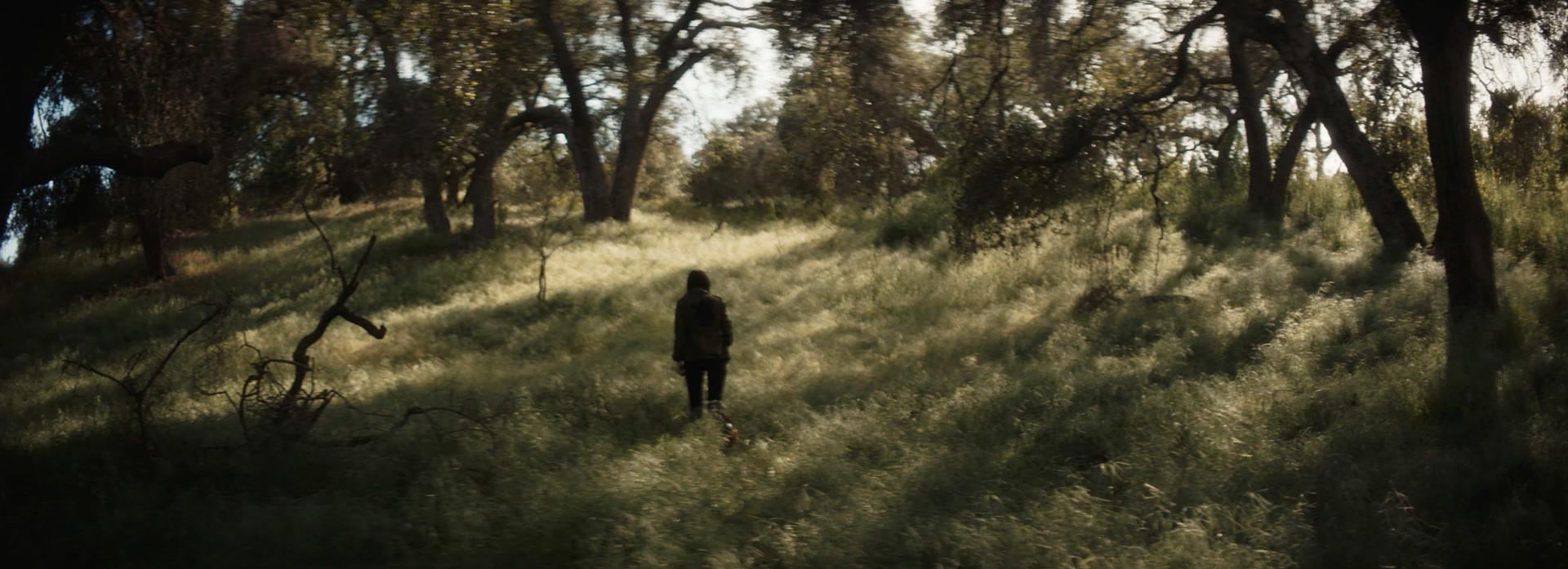 Photo 6 forest_3.jpg