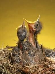 babybirds.jpg