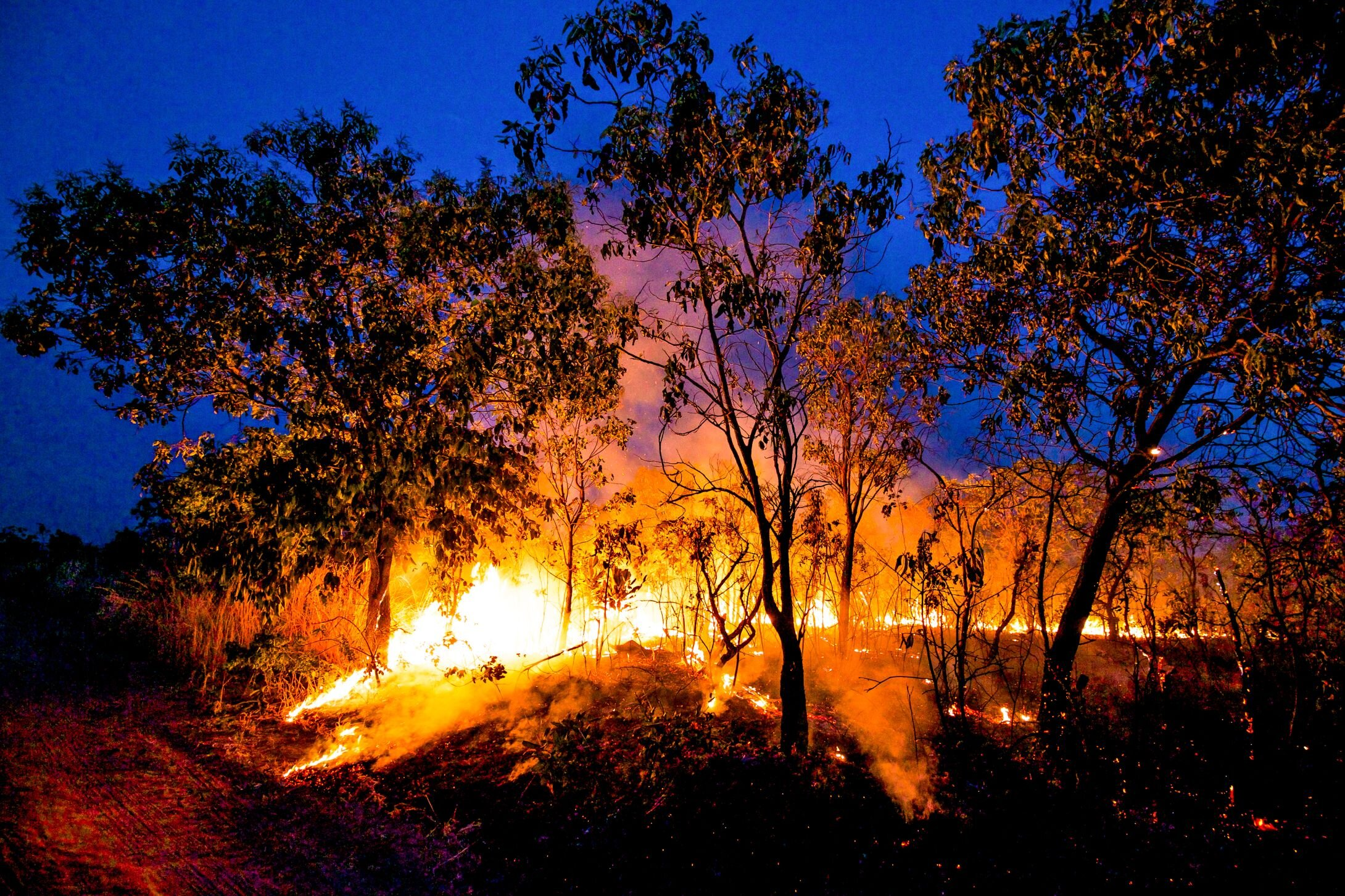 by-night-forest-fires-can-be-seen-for-miles-tearing-through-the-cerrado-ecosystems-1-2180x1454.jpeg