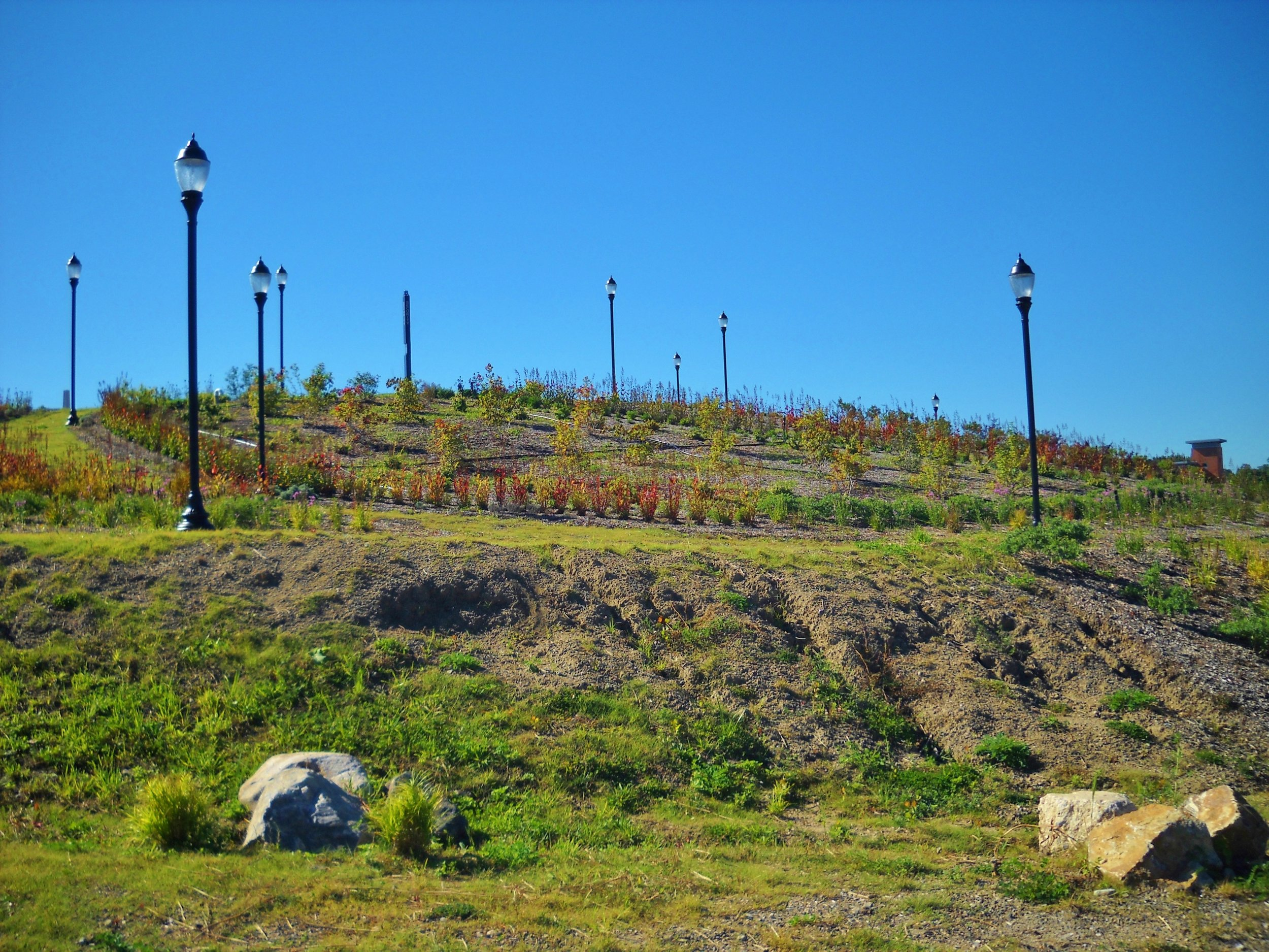 Hillside Planting (photographed in fall)