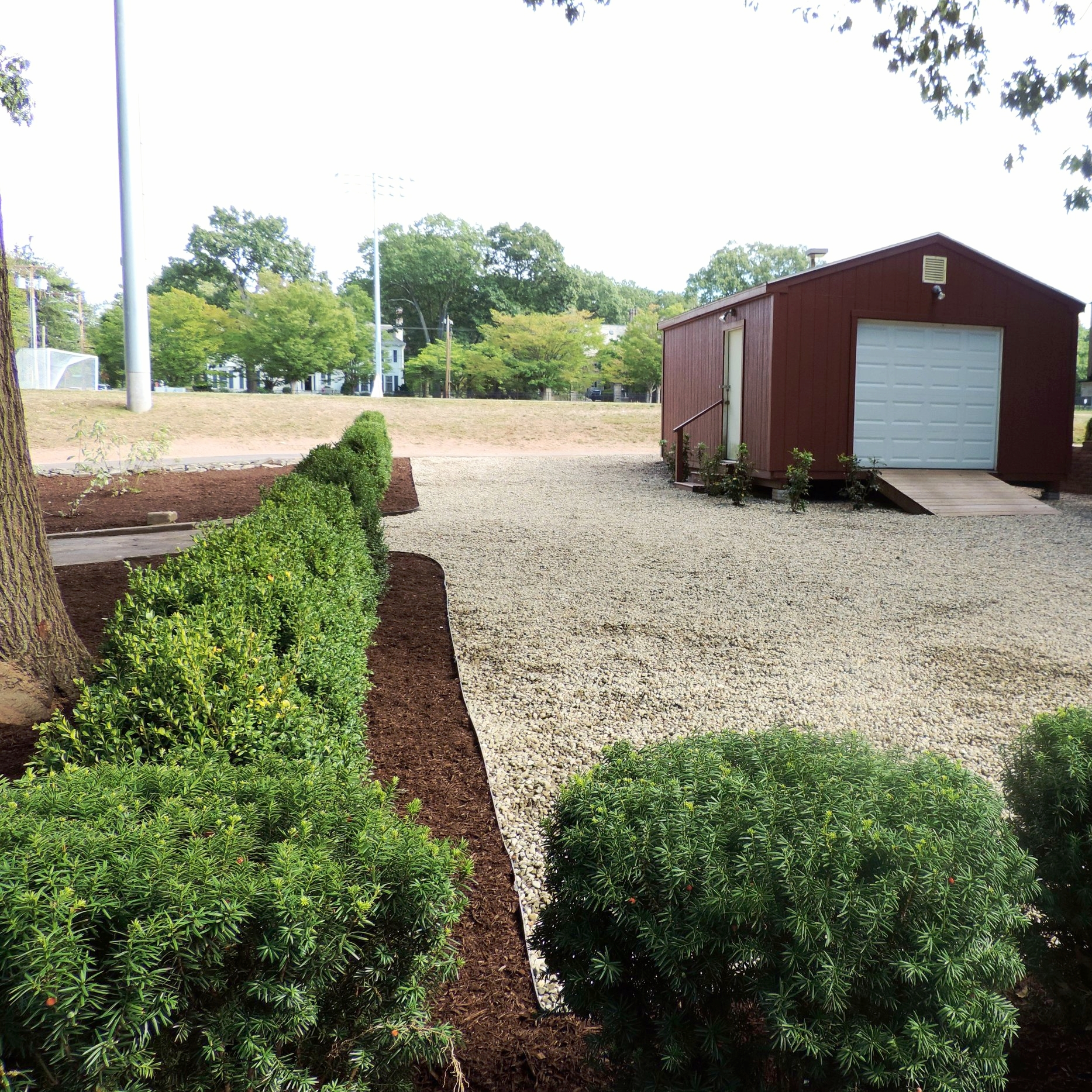 Boxwood Planting