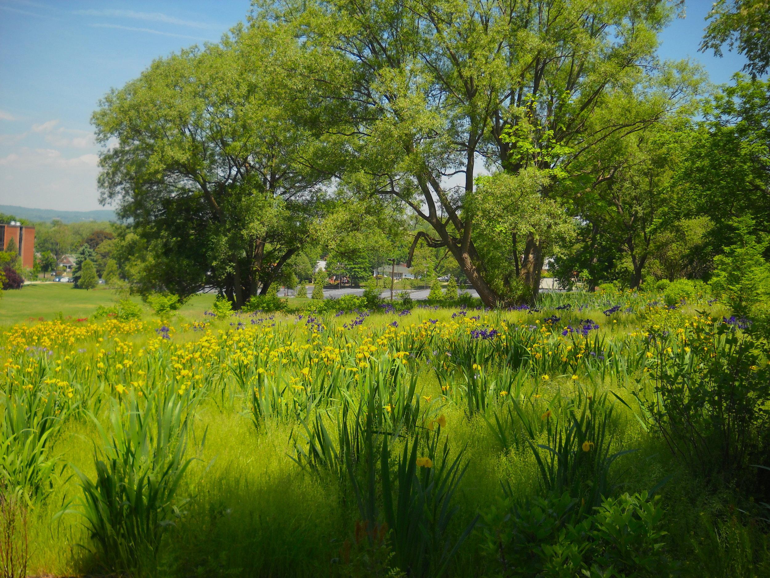 Wetlands Planting