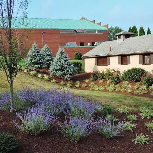 Blue Spruce Planting