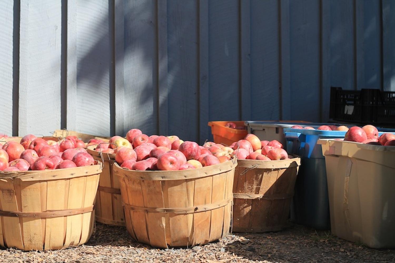 How Apples and Cider Shaped the U.S. - CONDÉ NAST TRAVELER