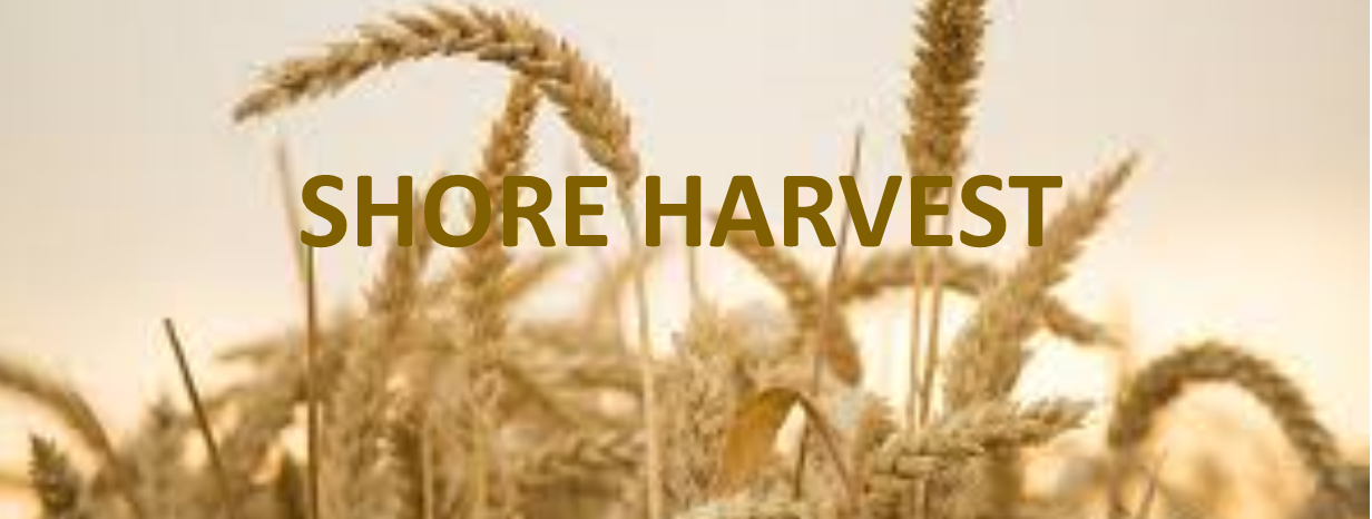 Shore Harvest wheat.jpg