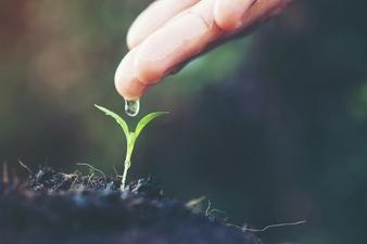 seedling-new-baby-forest-spring.jpg