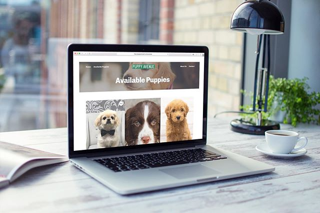 Find your new best friend on @puppyavenuefl new website by JFCO. 🐶