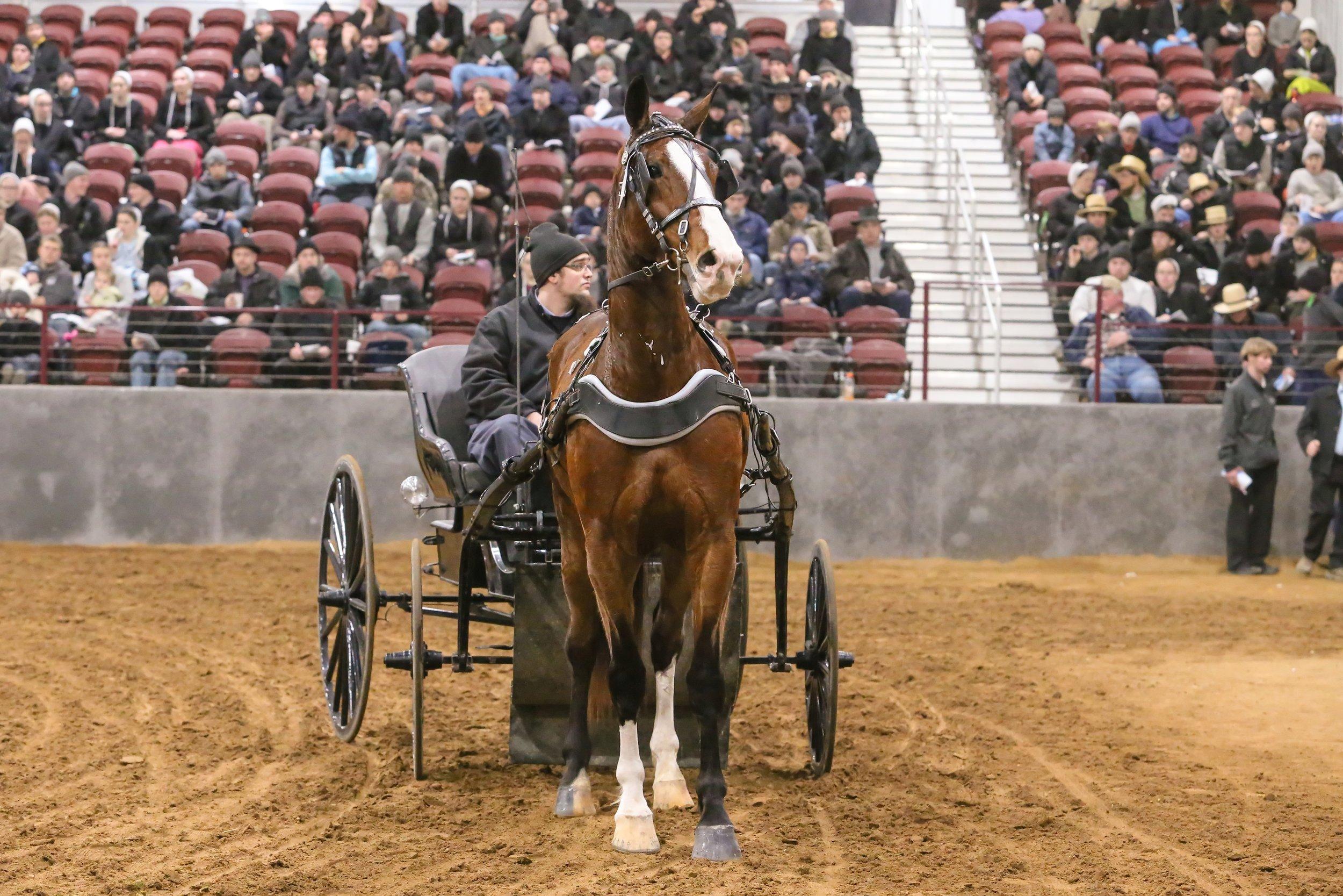 Michiana Driving Horse Auction