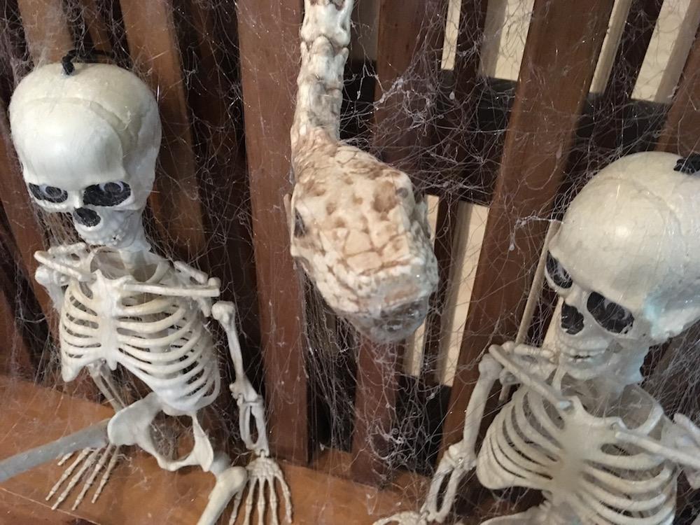 Skeletons, snake and webs.jpg