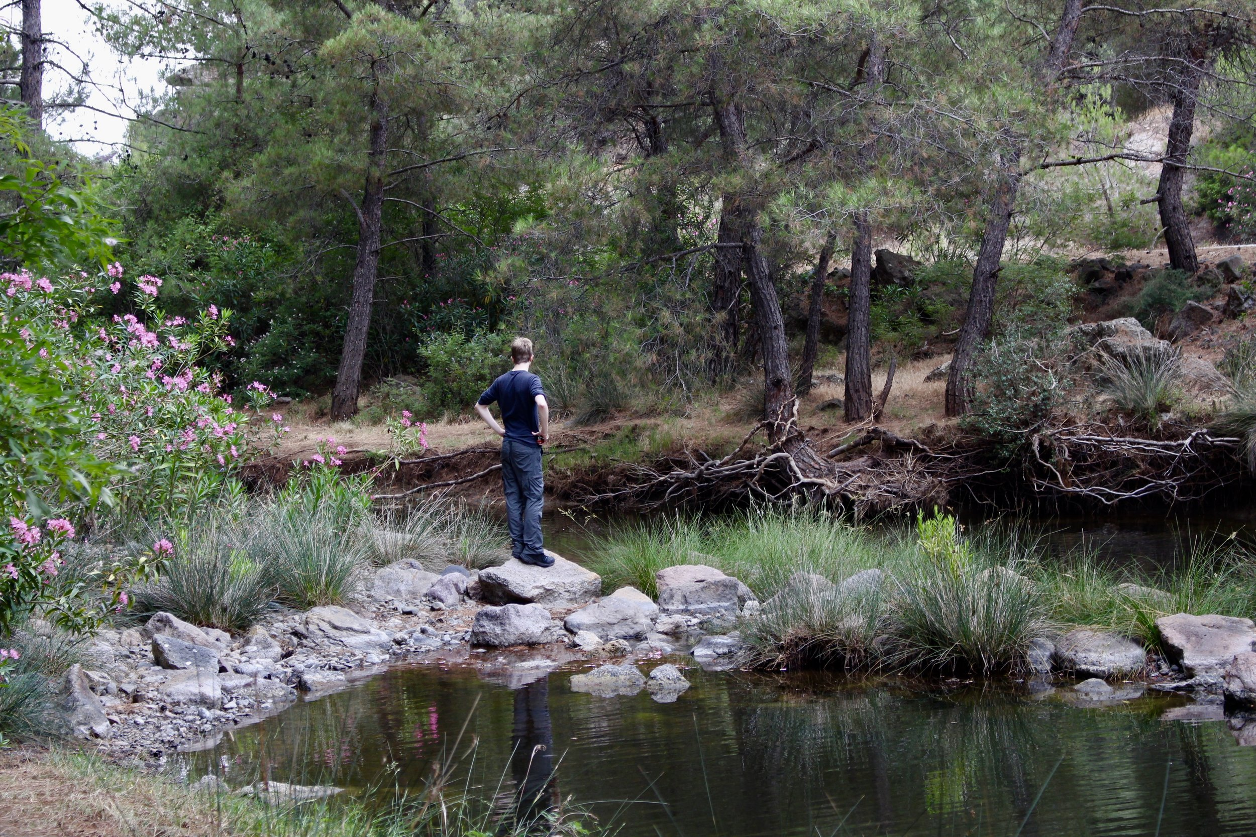 Matt Faherty surrounded by oleander and gazing at turtles along a Lesvos river.
