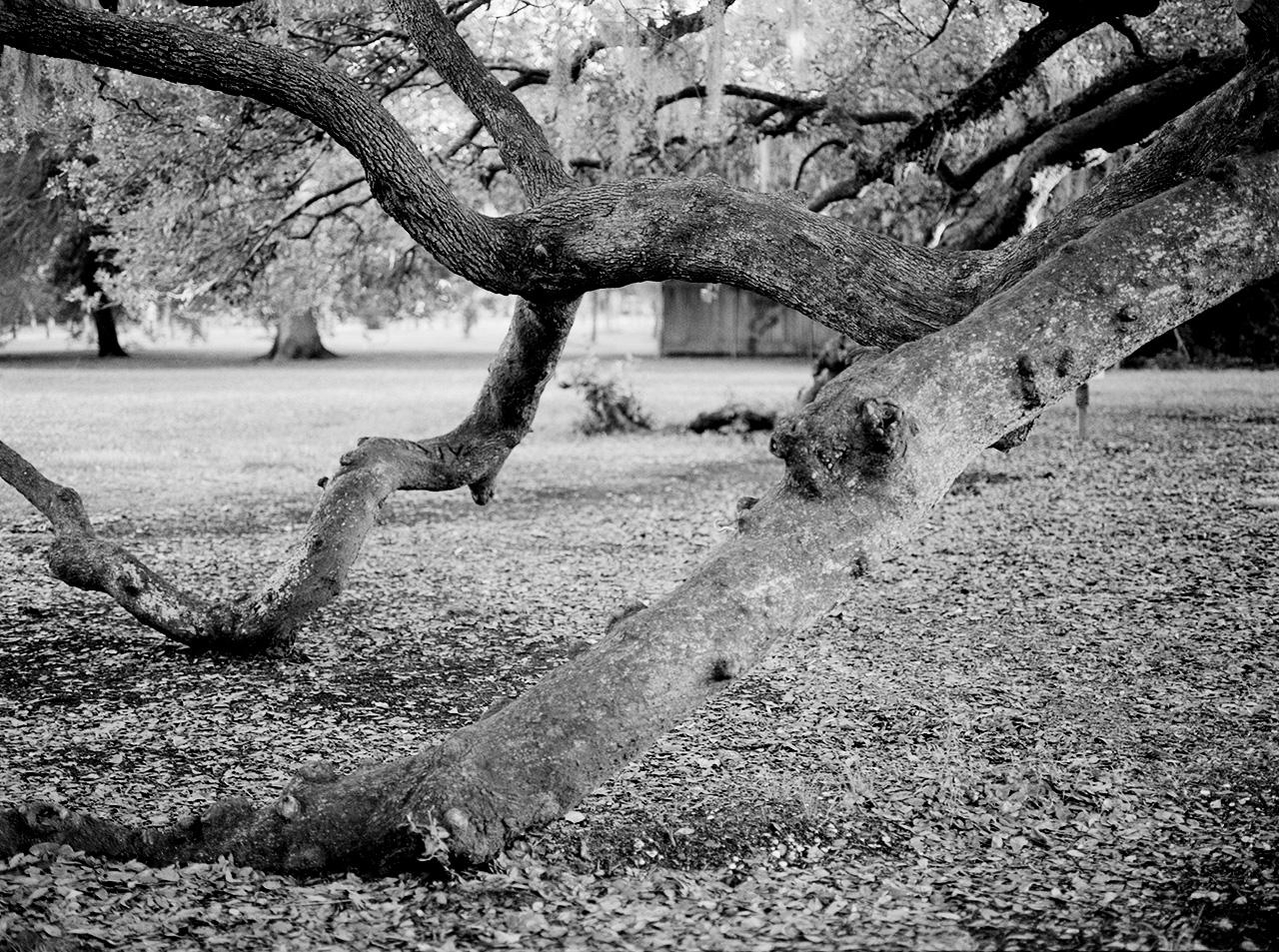 Lenain_Camille_11_Tree .jpg