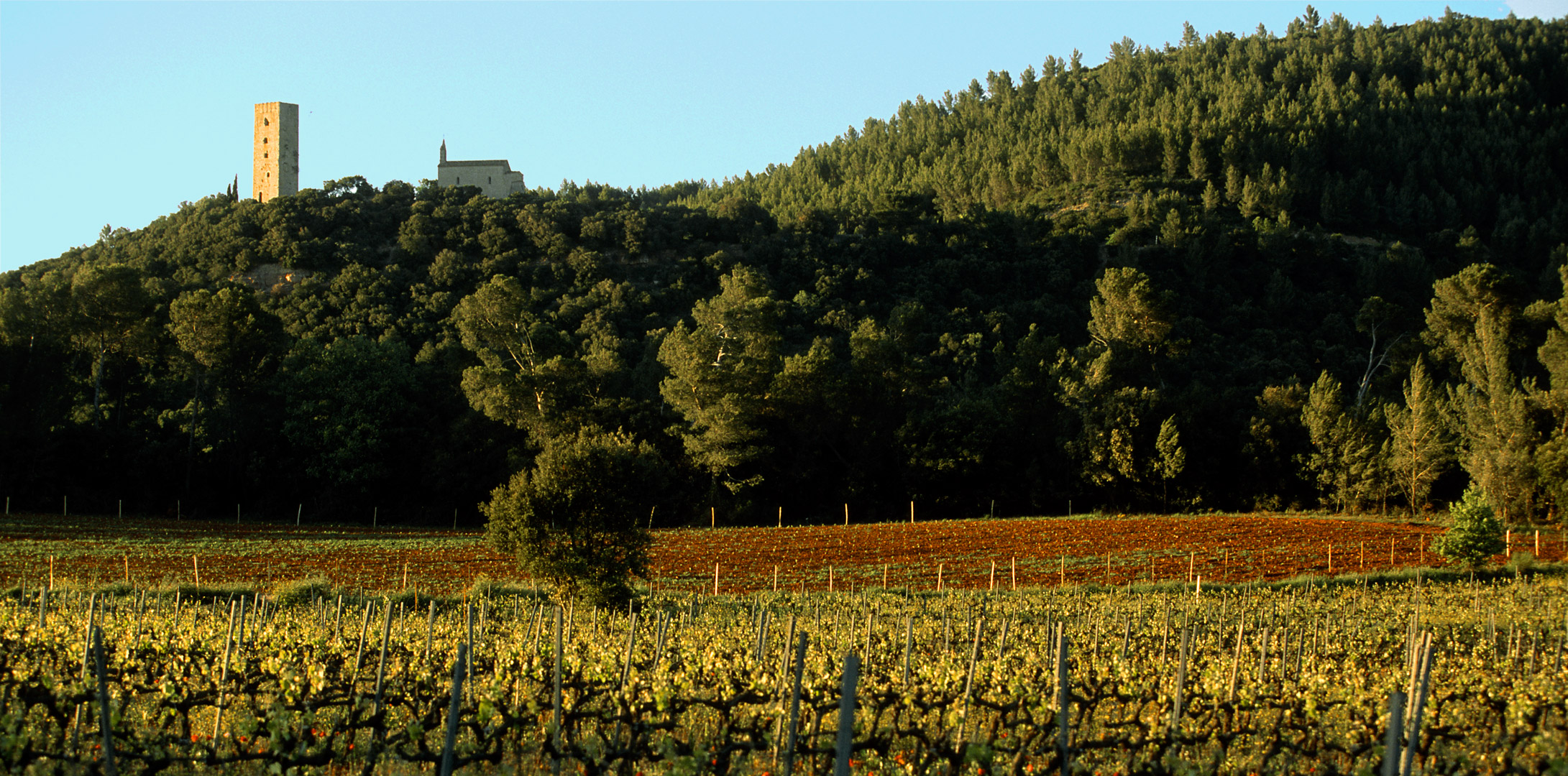 Notes in Modern Tasting ⏤ Château Saint-Martin, Central Var on Perfect Local Day by UNCOVR Travel
